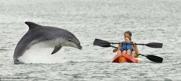 dolphin jumps while couple is rowing